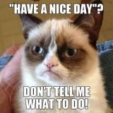 Grumpy Cat  Meme sursa: www.complex.com