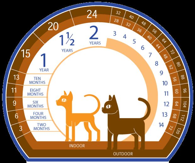 calendar varsta pisica
