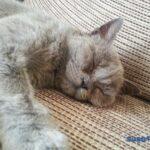 poziții de somn - miss yuki