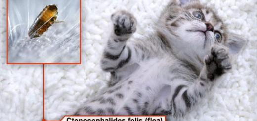 ssursa foto: pets.wemd.com