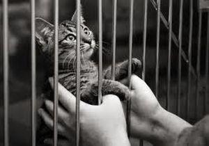 adoptie pisici
