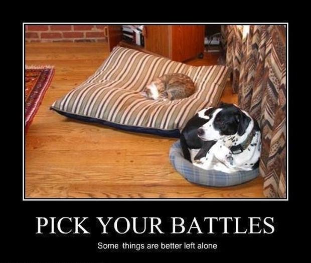 cat stealing dog beds