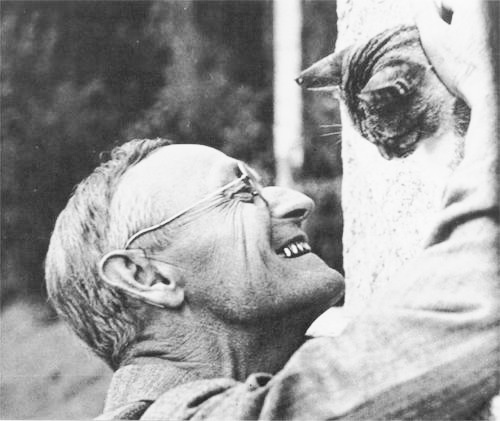 cat_and_herman_hesse