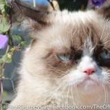 feature grumpy cat