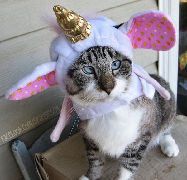 spangles-cross-eyed-cat-unicornr