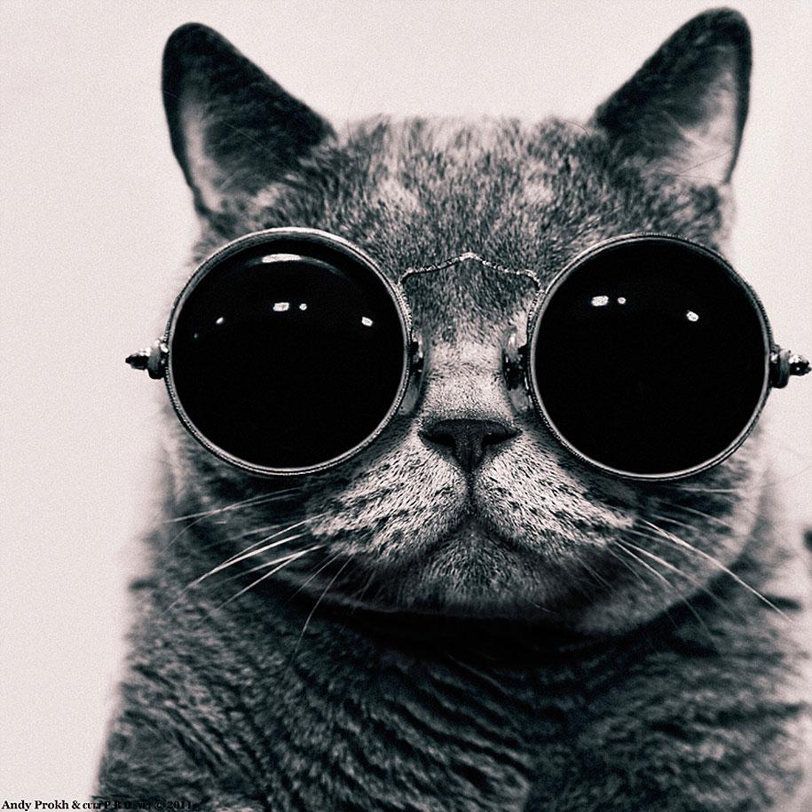 girl-cat-friendship-andy-prokh-10