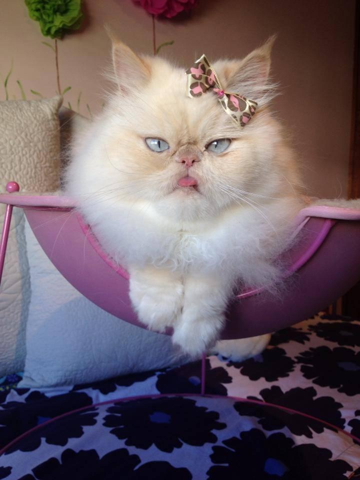 luna the fashion kitty 1