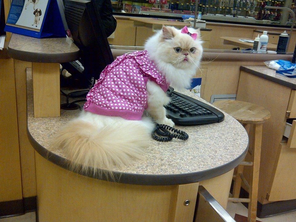 luna the fashion kitty 2