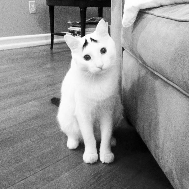 sam-cat-eyebrows_2