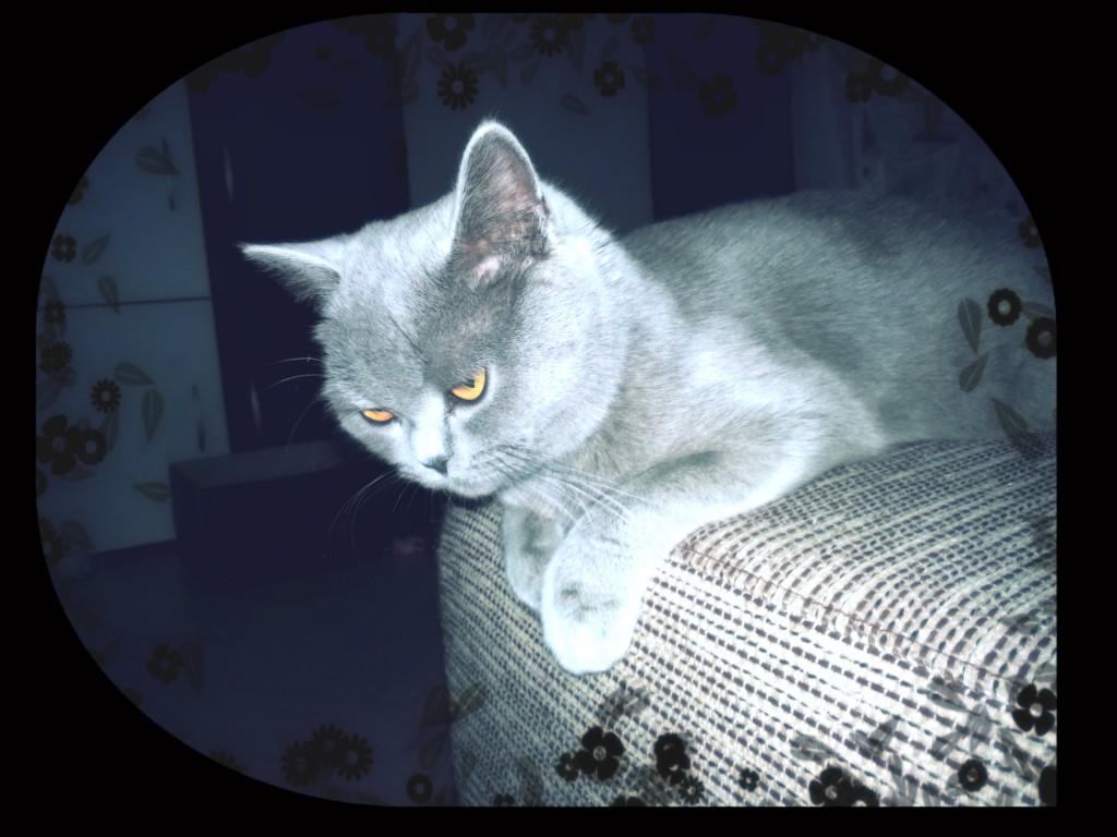 CAT JUMP MISS YUKI