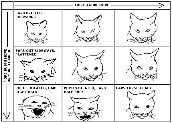CAT LANGUAGE - ce indica urechile pisicii