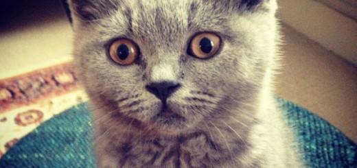 Citate Cu Fotografi : Citate cu pisici archives super pisi