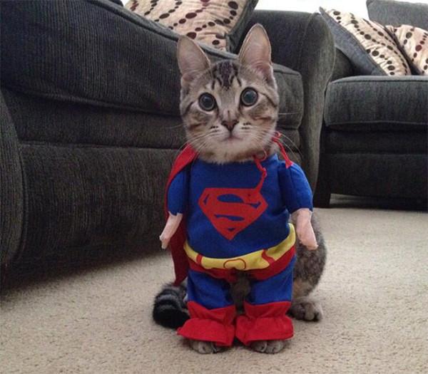 PISICA SUPERMAN