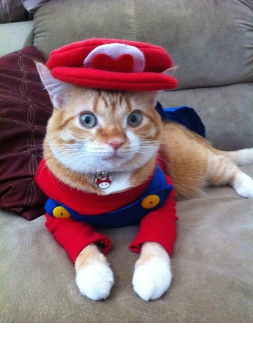 Super-Mario-Cat-Halloween-Costume.png