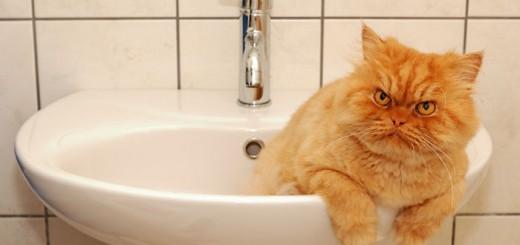 Garfi pisica furioasă, în chiuvetă