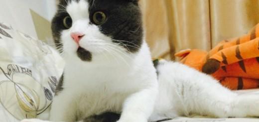 The OMG Cat - Banye - http://www.cool-thing.net