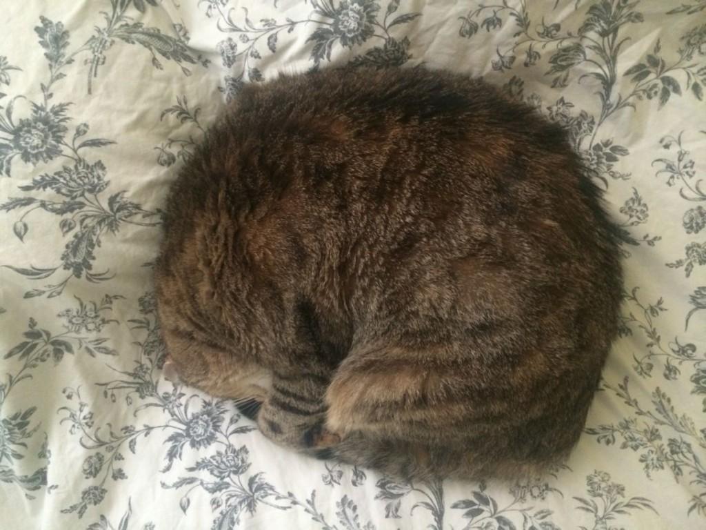pisica si craciunul mat