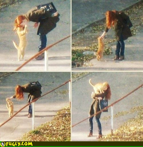 cats_love_redheads