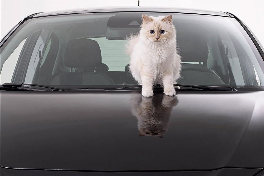 Choupette-cat2