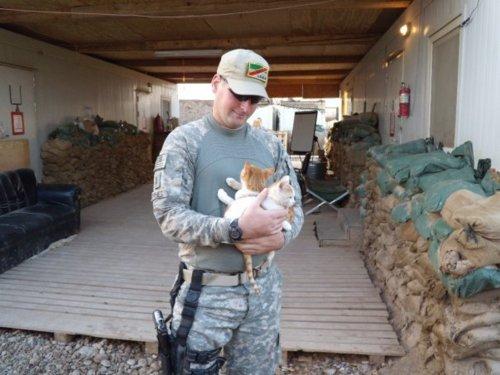 soldier-kitten-24