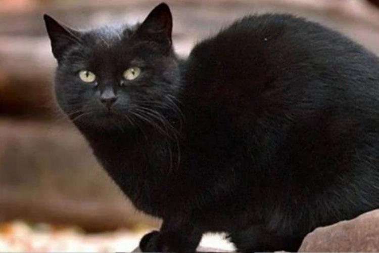 tomasso-richest-cat