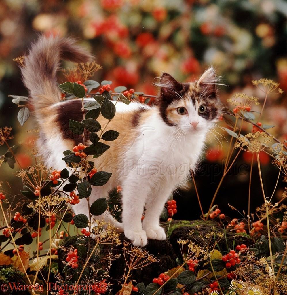 06030-Cat-among-autumn-berries