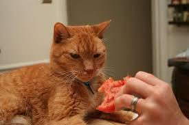 pisica si rosia