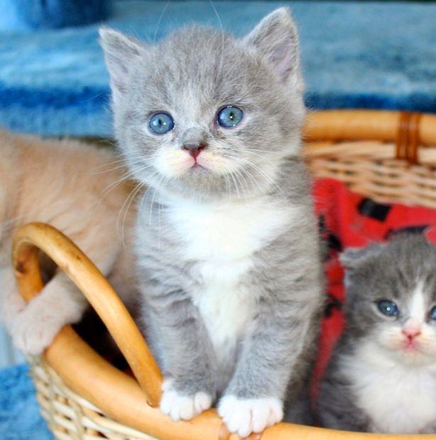 PAY-Citronelle-the-moustache-cat (1)