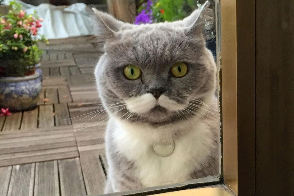 PAY-Citronelle-the-moustache-cat (2)