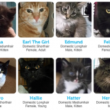 kitsap-humane-society-cats-adoption1