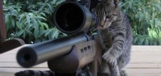 poze cu pisici 4