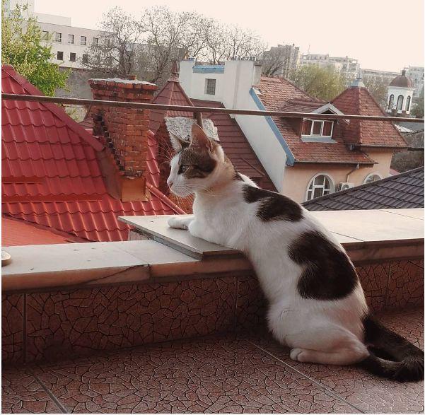 pisica-silva-1